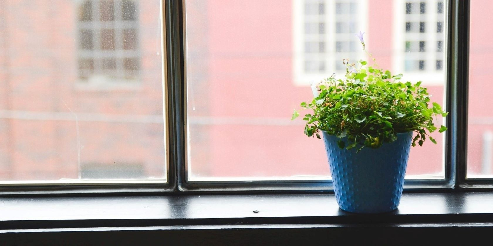 The 5 Best Android Apps for Taking Care of House Plants