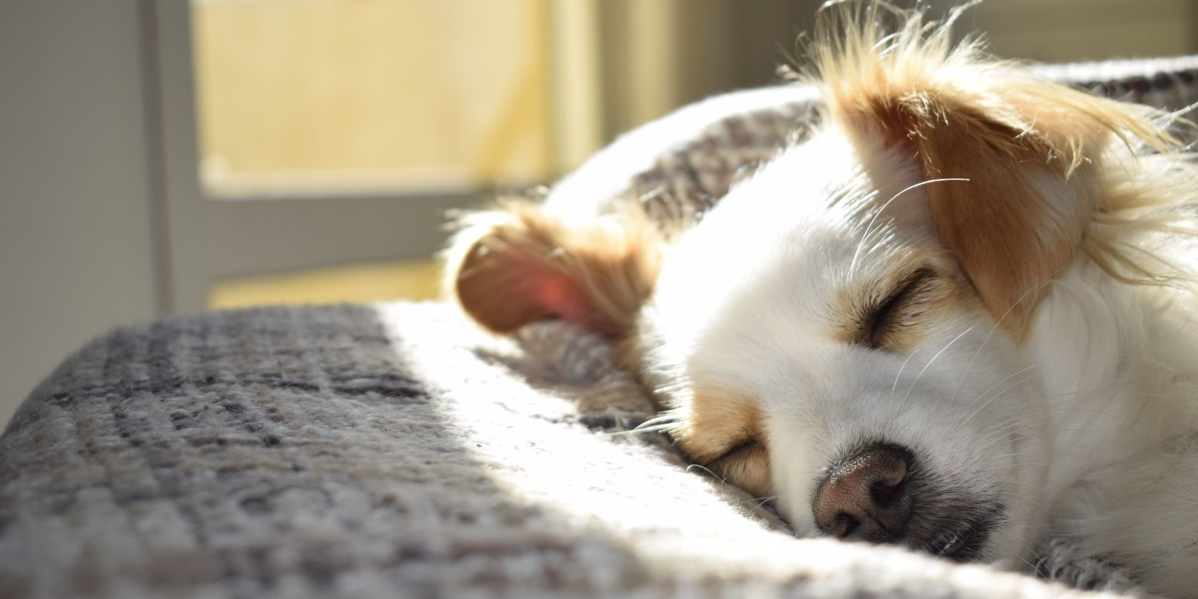 How to Get Treatment for Your Sick Pet With the FirstVet Video Vet Service